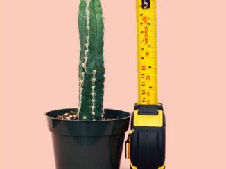 taille moyenne d'un sexe masculin